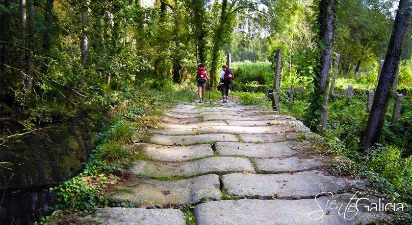 Camino de Santiago Porrino