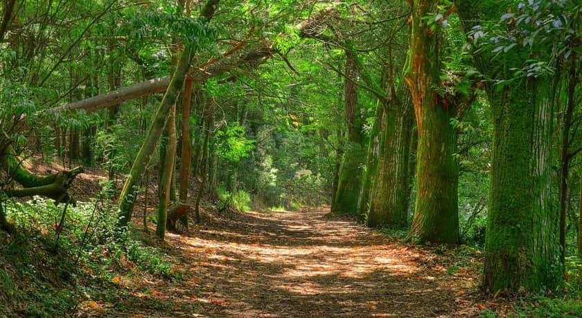 Bosque Encantado Alvaro Purre