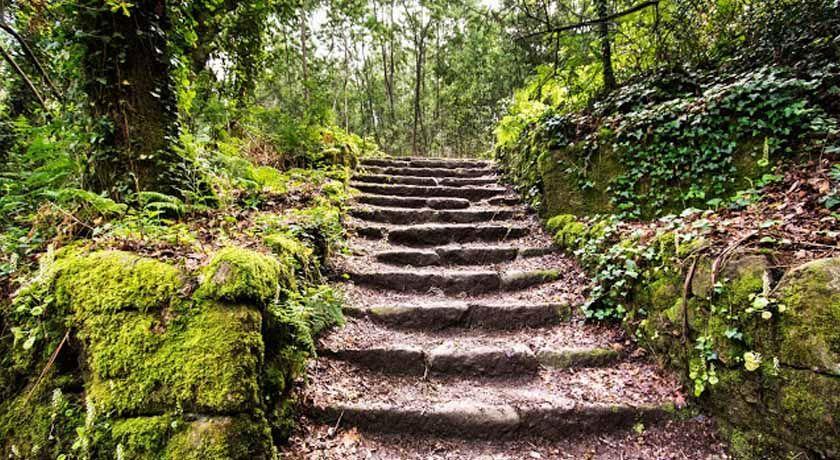 Bosque Encantado Jaime Varela