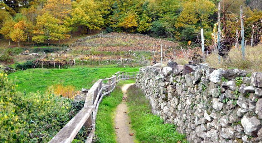 Ruta Vinedos de Belesar