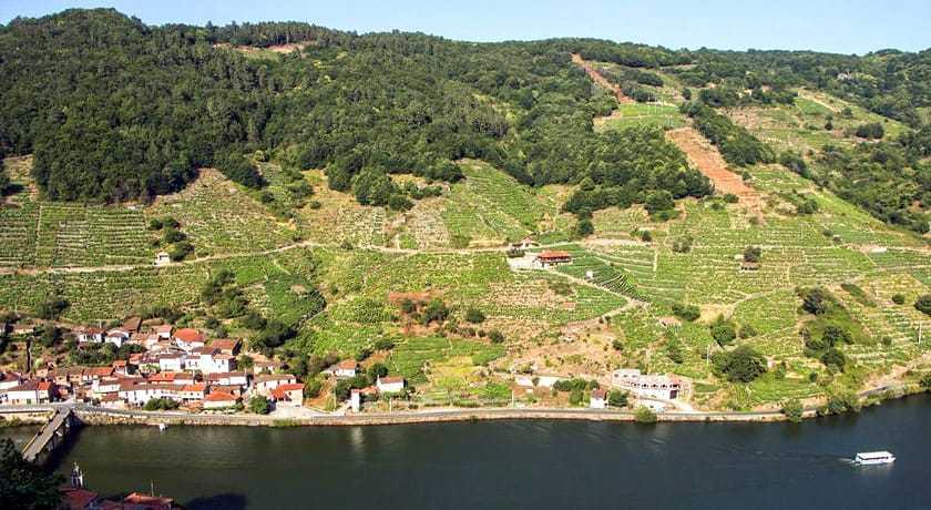Vinedos de Belesar