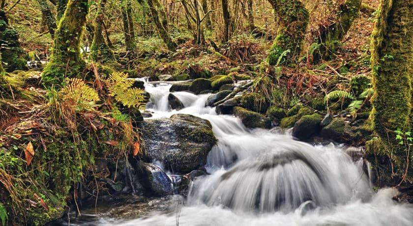 Bosque Otono Galicia