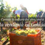 Por qué venir a la vendimia a Galicia