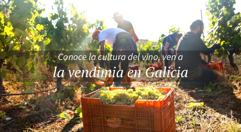 Vendimia en Galicia