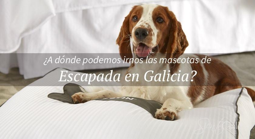 Viajar con mascota en Galicia